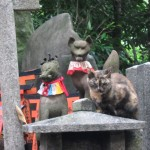 Seems like cats and foxes are in charge here. [2010/09/23 - Kyoto/Fushimi Inari-taisha]