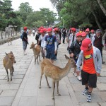 They are followed by the Red Horde. [2010/09/24 - Nara]