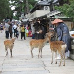 Not even monks are safe from begging deer. [2010/09/24 - Nara]