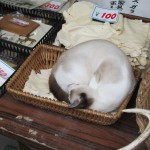 Is the cat for sale too? [2010/09/24 - Nara]