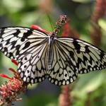 Ryugujo Butterfly Garden / Motobu [2012/10/04 11:46:57]