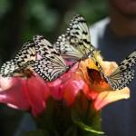 Ryugujo Butterfly Garden / Motobu [2012/10/04 11:48:24]