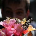 Ryugujo Butterfly Garden / Motobu [2012/10/04 11:49:10]