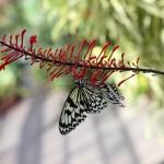 Ryugujo Butterfly Garden / Motobu [2012/10/04 11:53:34]