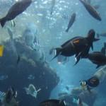 Okinawa Churaumi Aquarium / Motobu [2012/10/04 12:40:36]