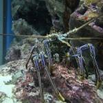 Okinawa Churaumi Aquarium / Motobu [2012/10/04 13:00:39]