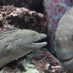 Okinawa Churaumi Aquarium / Motobu [2012/10/04 13:02:49]