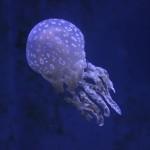 Okinawa Churaumi Aquarium / Motobu [2012/10/04 13:05:12]