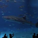 Okinawa Churaumi Aquarium / Motobu [2012/10/04 13:10:20]