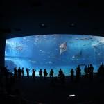 Okinawa Churaumi Aquarium / Motobu [2012/10/04 13:15:25]