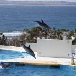 Okinawa Churaumi Aquarium / Motobu [2012/10/04 14:46:47]