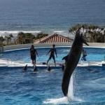 Okinawa Churaumi Aquarium / Motobu [2012/10/04 14:47:02]