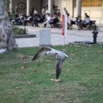 Topkapı Palace / Istanbul [2012/10/27 16:48:02]