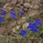 baikal-flowers-03