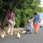Somewhere on Okunoshima (2014/08/01 10:49:32+09:00)