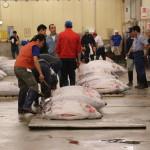 Tuna auction, Tsukiji Fish Market, Tokyo (2014/08/12 05:27:32+09:00)