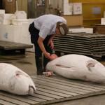 Tuna auction, Tsukiji Fish Market, Tokyo (2014/08/12 05:28:01+09:00)