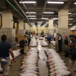 Tuna auction, Tsukiji Fish Market, Tokyo (2014/08/12 05:29:23+09:00)