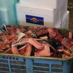 Tsukiji Fish Market, Tokyo (2014/08/12 05:47:27+09:00)