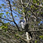 sanfrancisco-42-birds...-20150303_094550_6d_img_6305_down1600