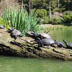 sanfrancisco-47-the_turtles_on_the_lake_3-20150303_115404_6d_img_6384_down1600