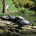 sanfrancisco-48-the_turtles_on_the_lake_4-20150303_115420_6d_img_6386_down1600