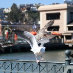 sanfrancisco-57-feeding_time_2-20150305_120651_6d_img_6449_down1600