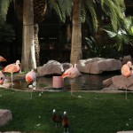 lasvegas-70-at_the_flamingo_4-20150312_082813_6d_img_7142_down1600