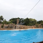 023-Loro_Parque_gallery_8_Flying_dolphins-20151227_111924_6d_img_1439_down1920
