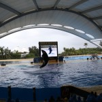 024-Loro_Parque_gallery_9_Orcas_I_hope_they_have_another_bigger_tank_somewhere_because_this_is_bit_small_for_a_family_of_orcas-20151227_114853_6d_img_1456_down1920