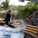 026-Loro_Parque_gallery_11_Flying_orca-20151227_120447_6d_img_1498_down1920