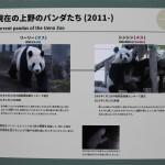 136-Panda_info_panels_1-20160502_094325_6d_img_3709_cropped_qual100_down1920