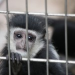 139-Monkeys_Its_always_depressing_when_they_stuff_animals_that_are_used_to_having_lots_of_space_in_those_little_cages...-20160502_100601_6d_img_3743_down1920